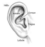 Anatomie d'oreilles décollées